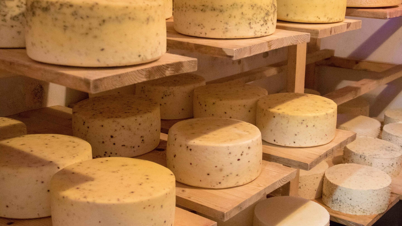 tehéntejből készült sajtok az érlelőben